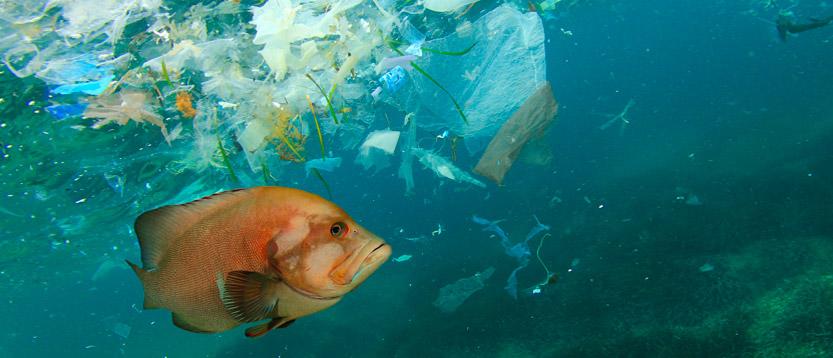 plastica nei mari , evitiamo l'inquinamento dell'acqua
