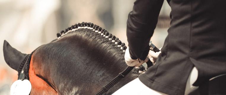 travagliato cavalli a brescia fiera dei cavalli