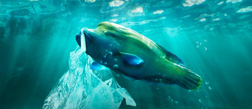 animali che vivono nei mari pieni di plastica