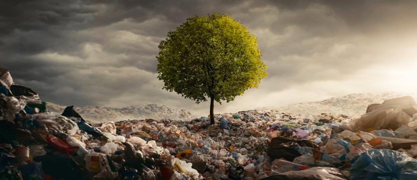 Plastic Free per combattere la plastica dall'ambiente