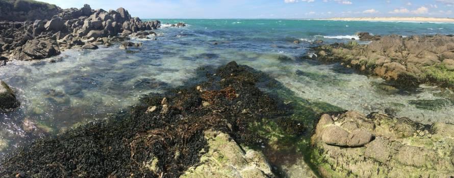 esempio di mucillagine dovuto alle alghe