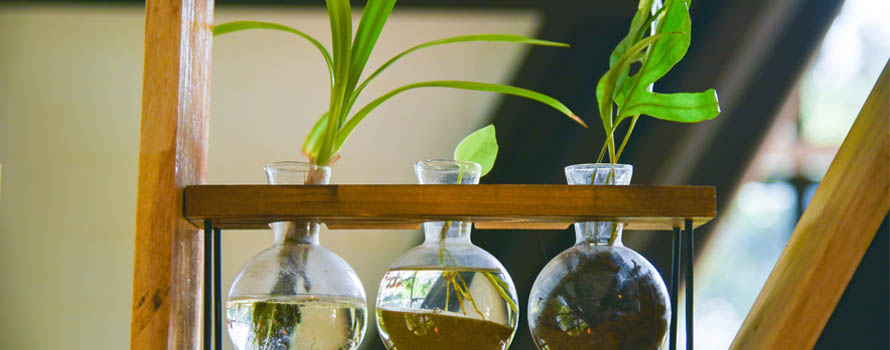 le piante in acqua nella nostra casa