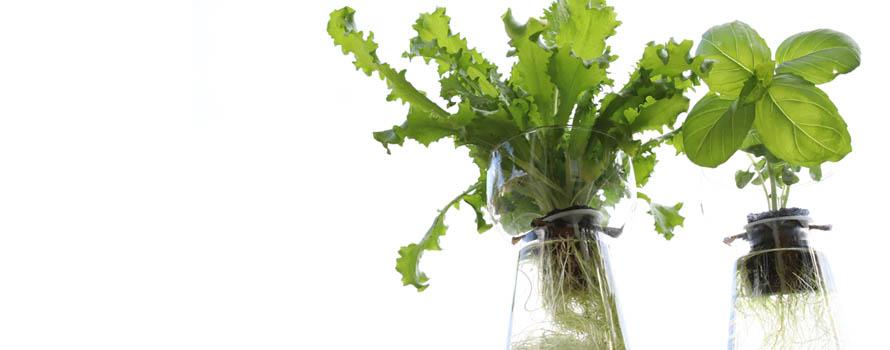 piante-in-acqua-vasi-vetro