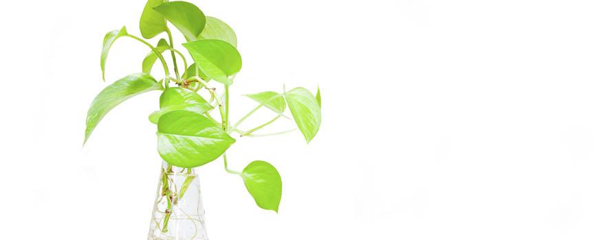 piante-in-acqua-vaso-vetro