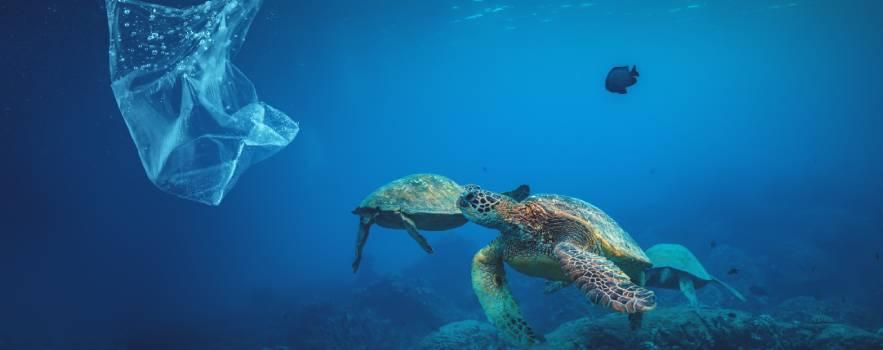 La giornata mondiale senza sacchetti di plastica si può fare