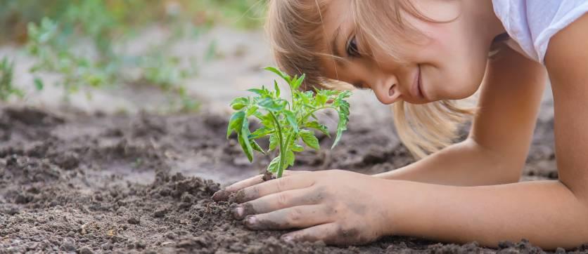 la cura che l'uomo deve avere nei confronti dell'ambiente